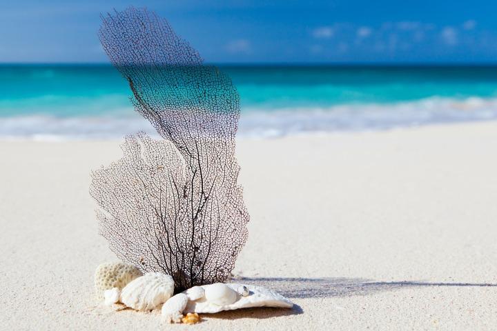 beach-84565_1920