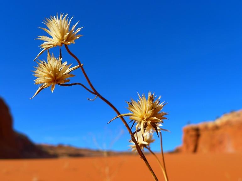 desert-82403_1920