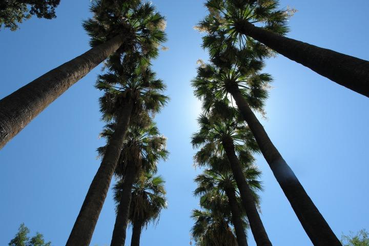 palms-2407308_1920