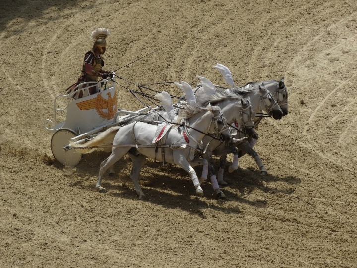 horses-1976554_1920