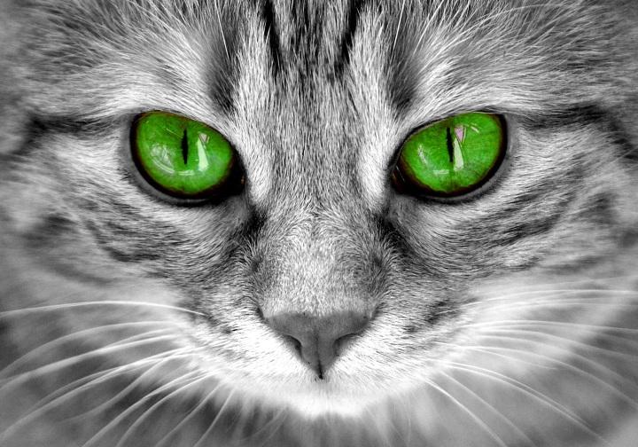cat-2806300