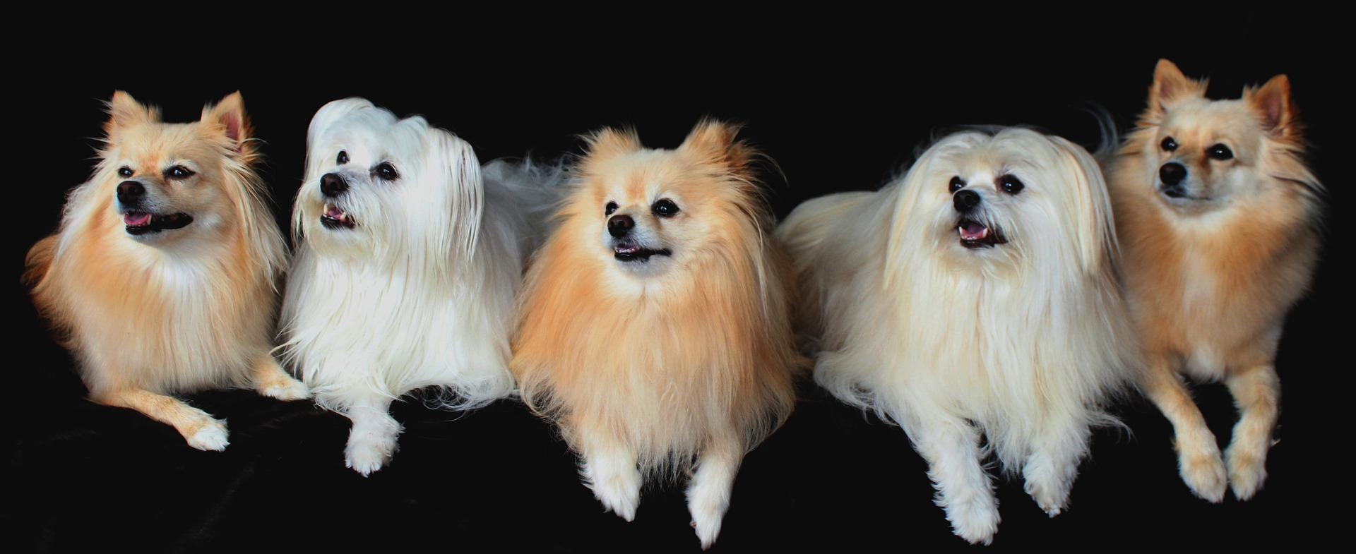 dogs-1668020_1920