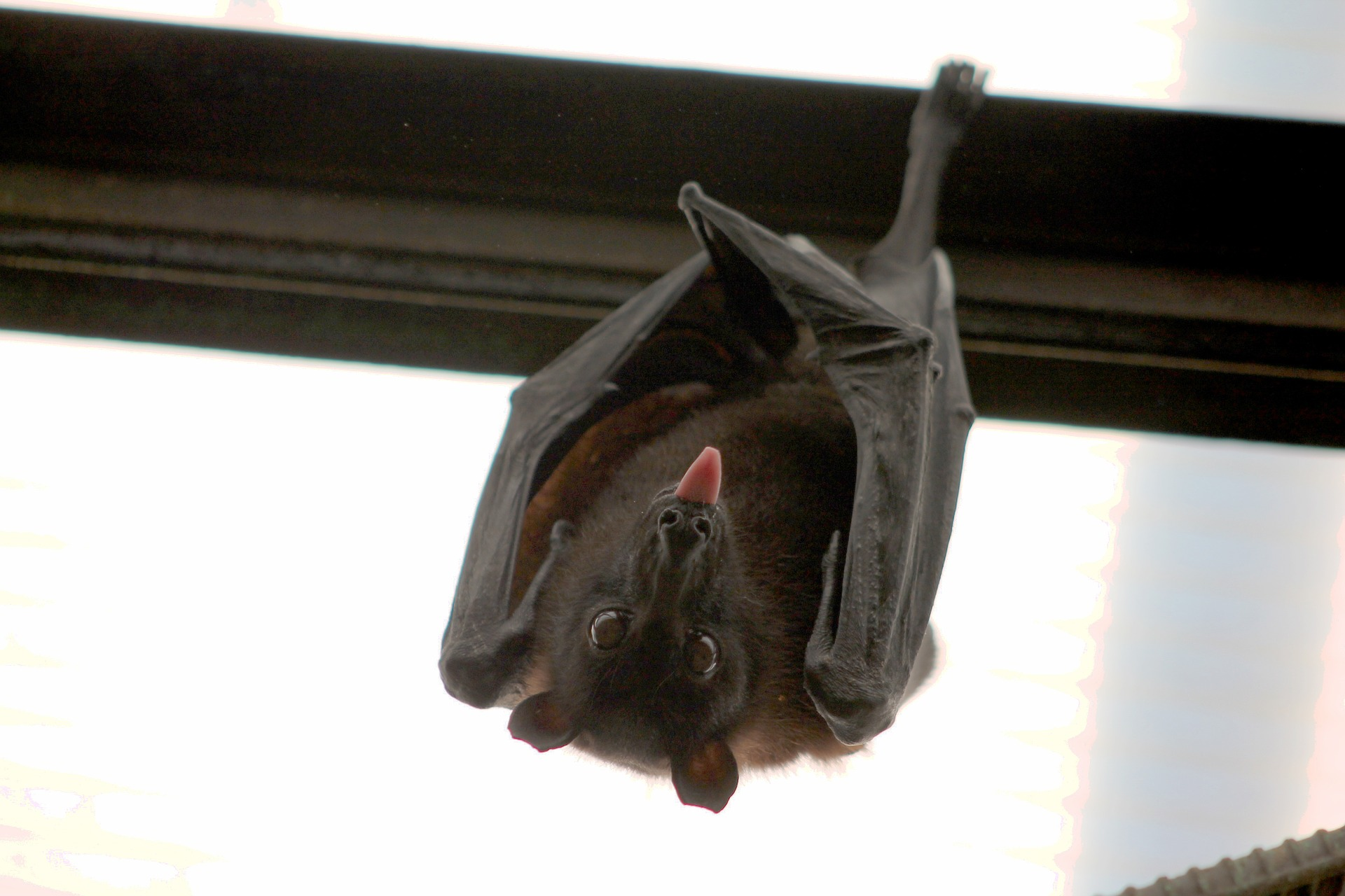 bat-1268650_1920