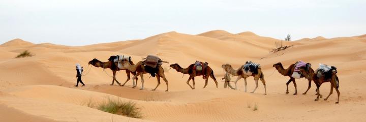 desert, caravan,
