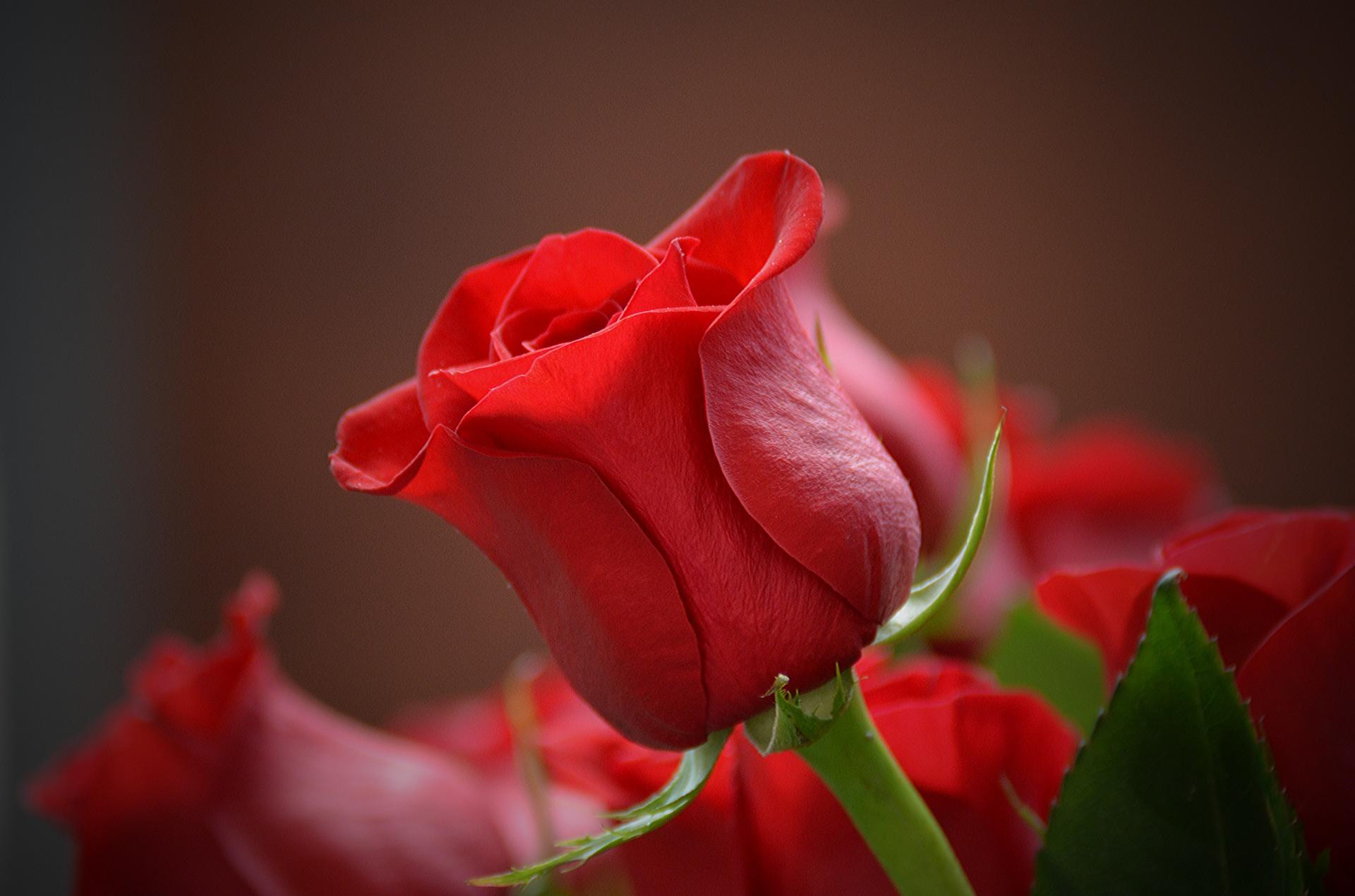 flower-3115353_1920