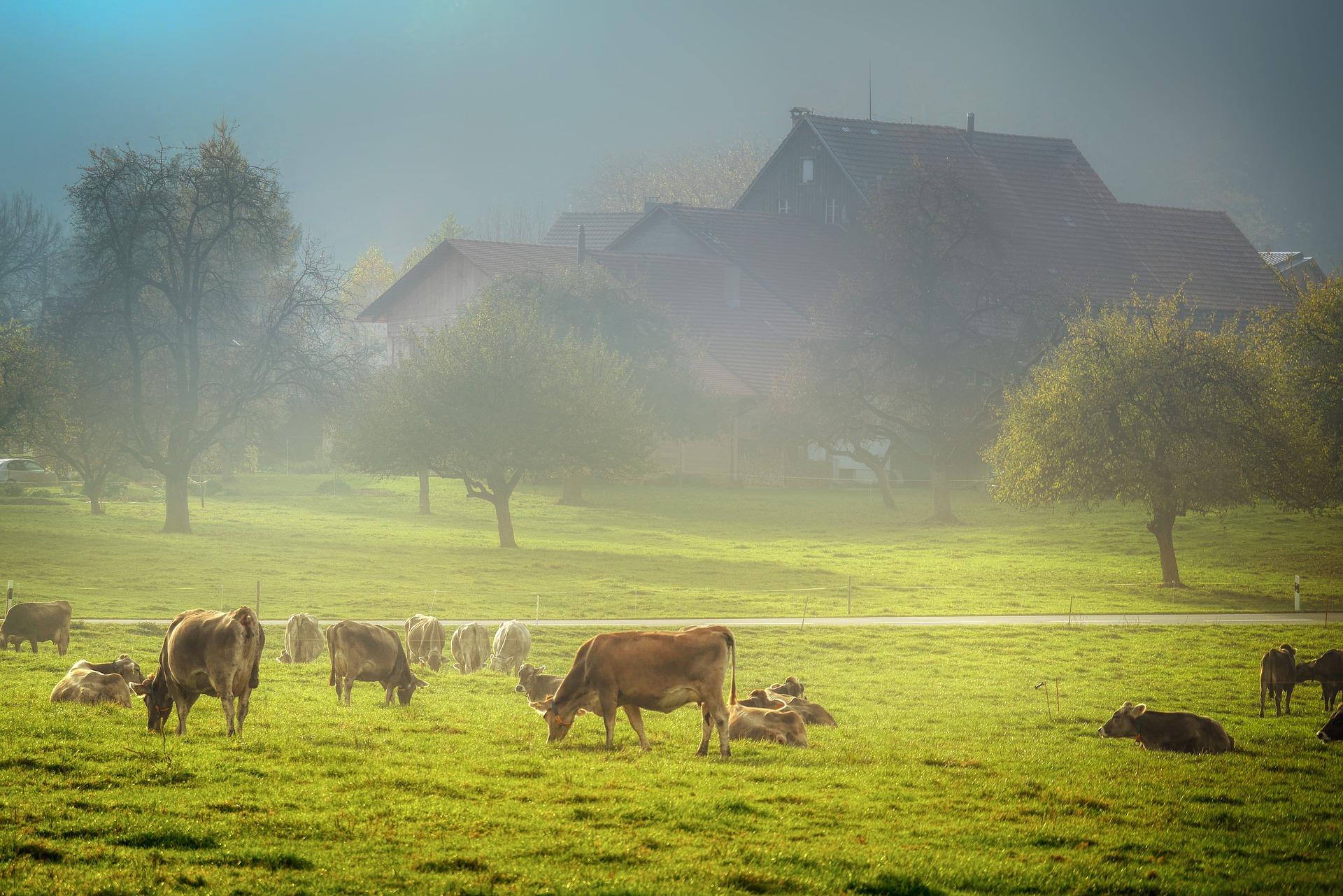 pasture-4074565_1920