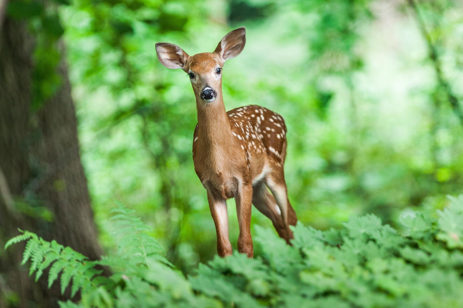 wildlife-1367217_1920