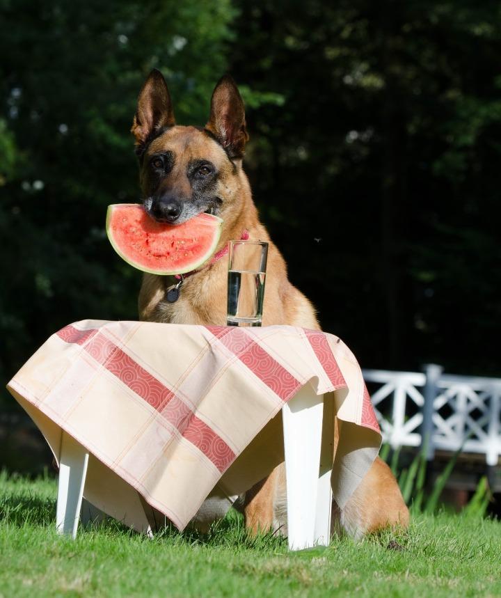 dog-trick-672647_1920