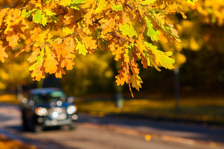 leaves, sunlight, car