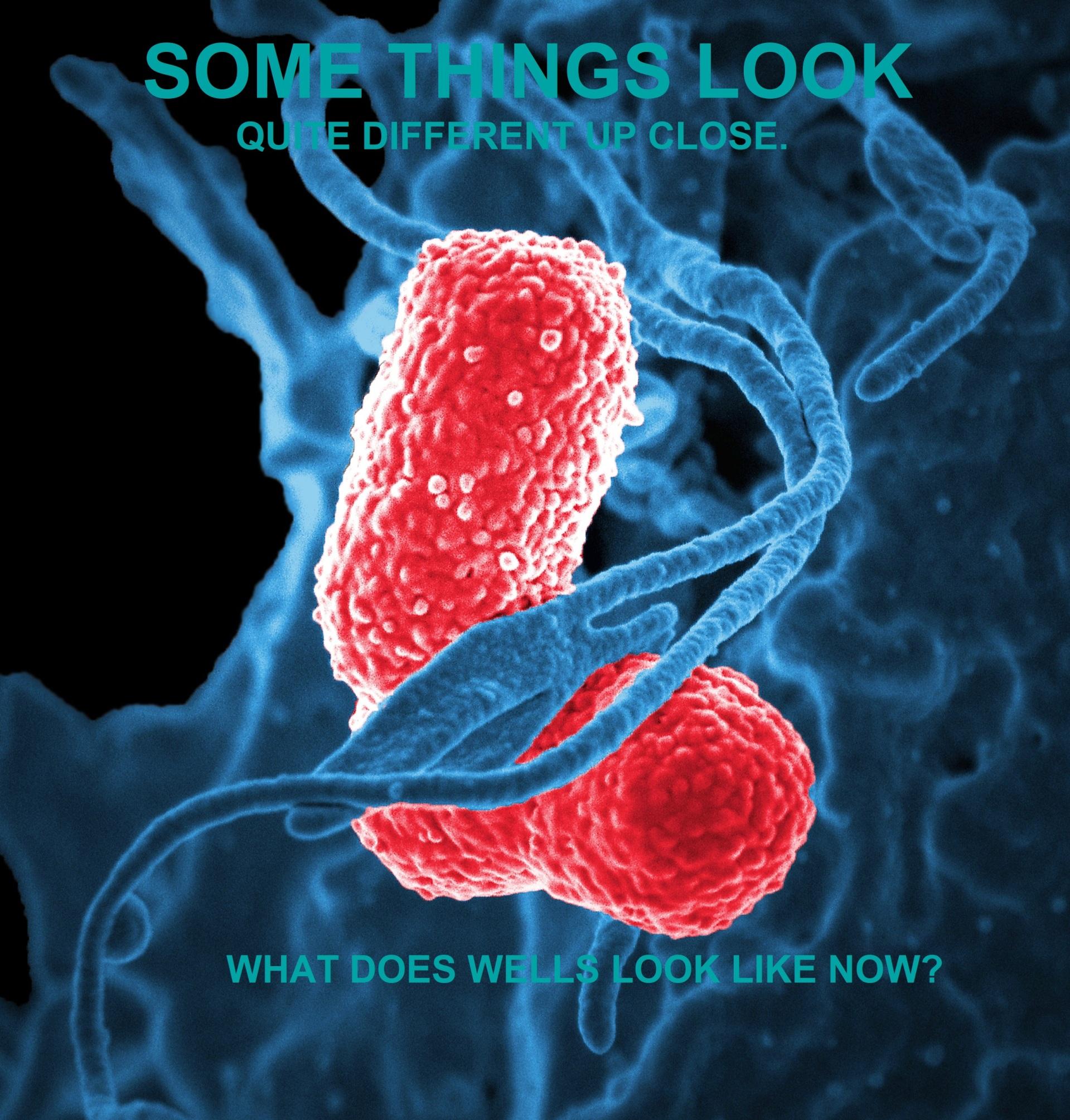 bacteria-Wells