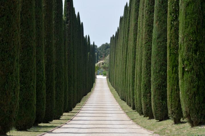 driveway, cypress