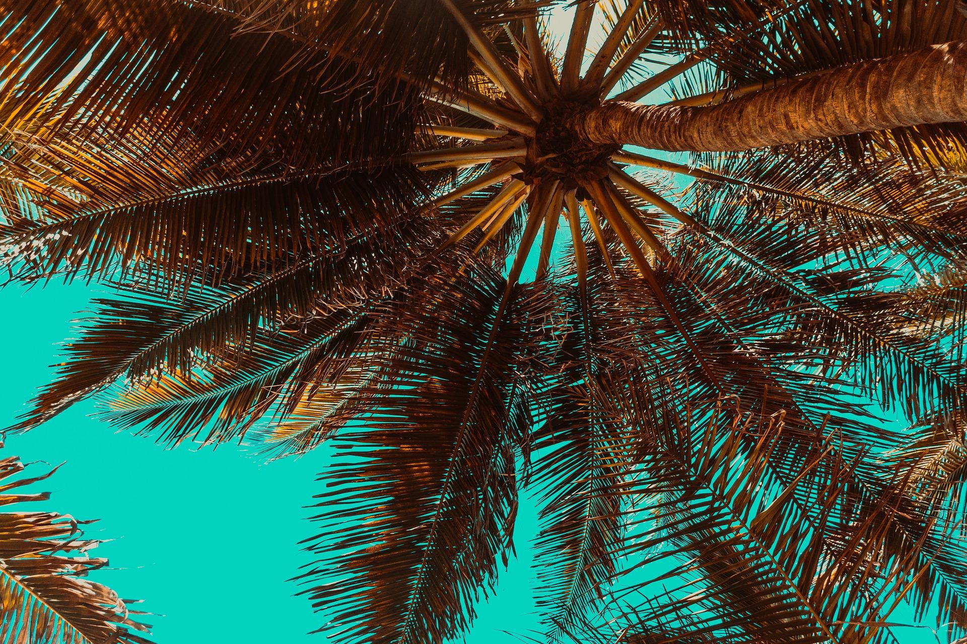 trees-3619180_1920